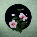 Happily Hibiscus Applique Pattern